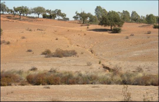 NOVA FCSH assinala Dia Mundial do Combate à Seca e à Desertificação